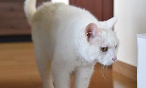 【納品事例】猫を飼っているお客様