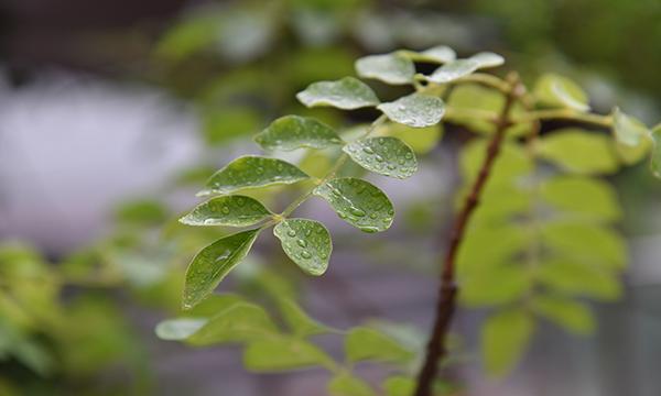 梅雨時の湿気対策・メンテナンスのすすめ
